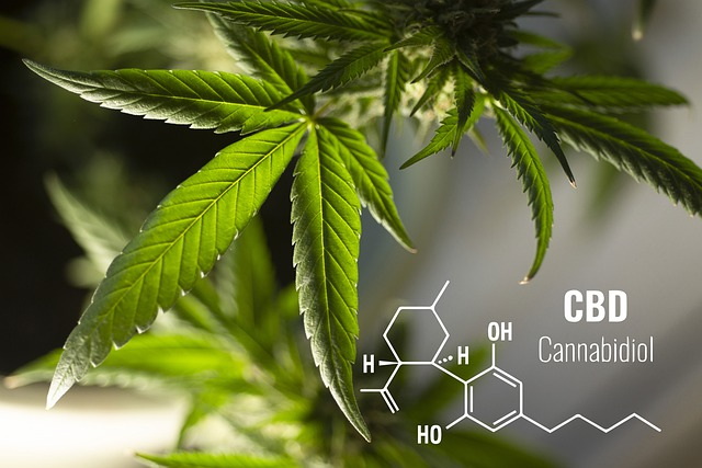 Marijuana leaves CBD